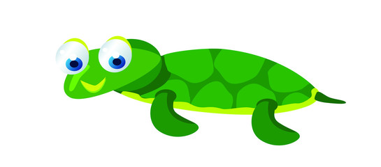 cute baby turtle