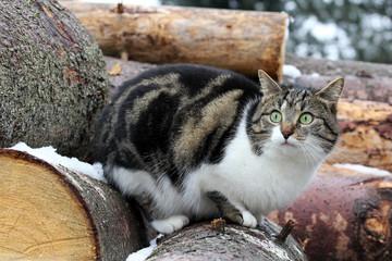 Auf dem Holz