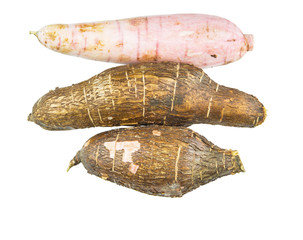 Tapioca Cassava roots over white background