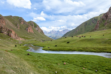 Mountains, river and farm animals, Tien Shan