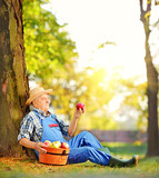 Male worker with basket of apples sitting in orchard and looking