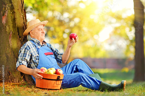 Male worker in overalls looking at apple in orchard