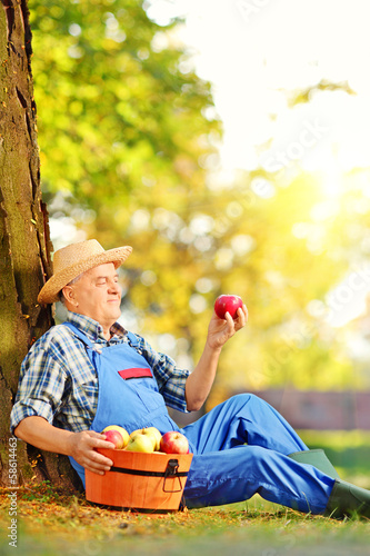Agricultural worker with basket of apples sitting in orchard