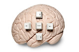 Brain with computer keys