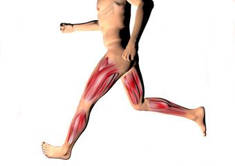 Uomo in corsa muscoli polpaccio, coscia corpo umano