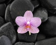 Macro of orchid with pebbles