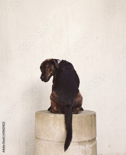 mixed breed dog looking behind on a pedestal