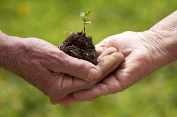 Close up conceptual photo of old people holding plant
