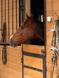 Obrazy na płótnie, fototapety, zdjęcia, fotoobrazy drukowane : Sad horse