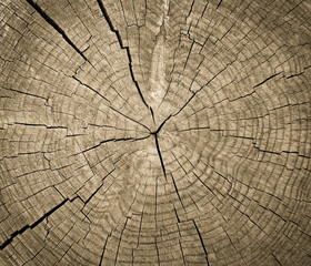 Cross section of tree trunk showing growth rings,texture