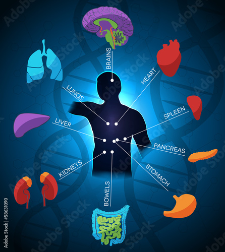 Human anatomy colorful design, DNA chain at the background