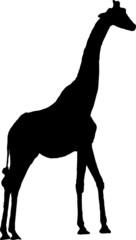 pictogramme girafe