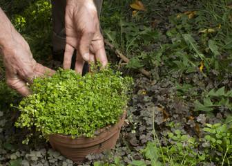 Gardener holding flowerpot