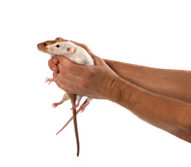 Two rats in human outstretched hands