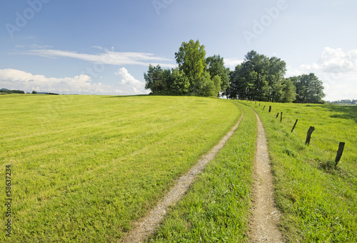 canvas print picture der Weg in den Wald