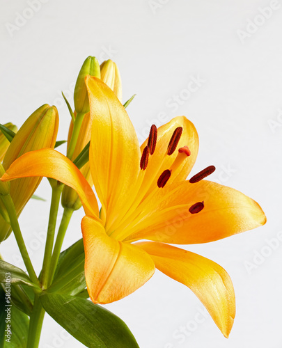 Bright orange lily flower