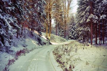 Verschneiter Märchenwald