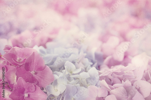 Keuken foto achterwand Bloemenwinkel Pink hydrangea flowers