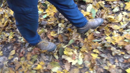 Follow man legs walk between colorful autumn leaves