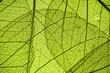 canvas print picture - green leaf texture - in detail