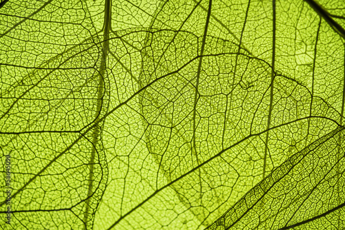 canvas print picture green leaf texture - in detail