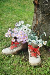 Flowers in old shoes