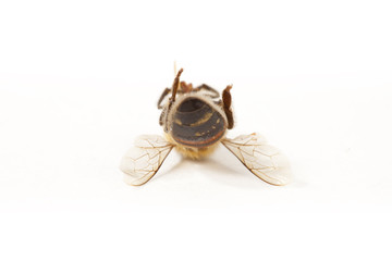 Upside down bee
