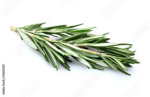 Rosemary in closeup
