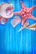 sea shells on blue board