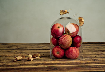 Apfelkäfer