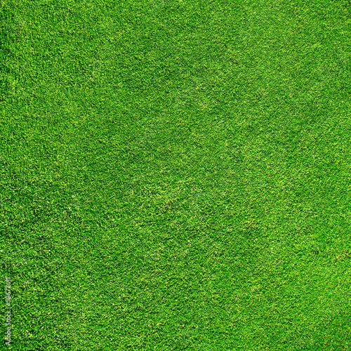 Beautiful green grass texture from golf course