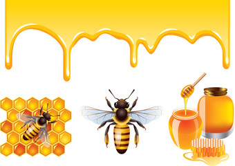 Honey, bee, honeycells vector set