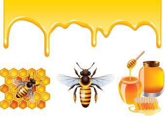 Honey, bee, honeycells vector set