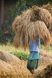 Nepali teenager making hay in Teraï poster