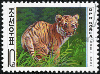 stamp printed in DPR Korea shows tiger cub