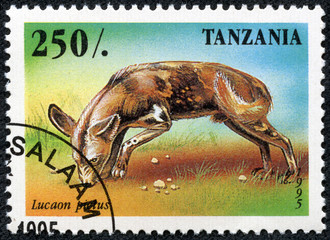 stamp printed in Tanzania shows Lycaon pictus