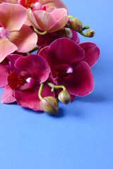 Beautiful blooming orchid on color background