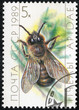 stamp printed in the USSR shows a male honey bee