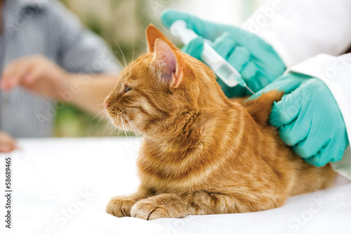 Veterinarian giving injection to a little cat