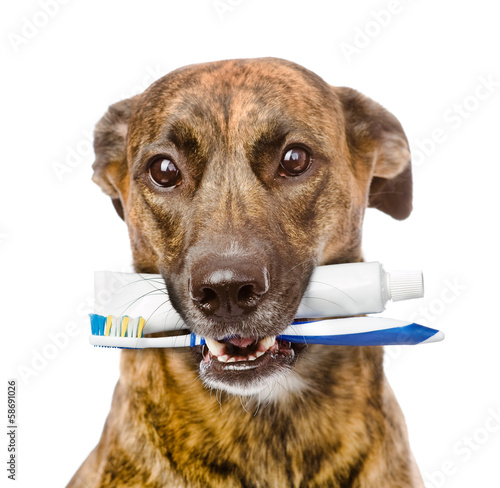 mixed breed dog with a toothbrush and toothpaste. isolated