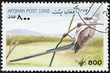 stamp printed in Afghan shows Colius macrourus