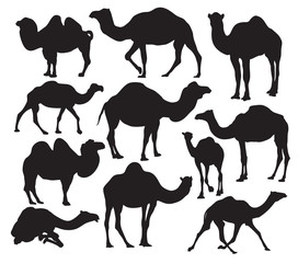 Vector camel silhouette