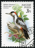 stamp printed in Hungary, shows the Syrian Woodpecker