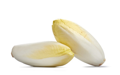 Two fresh Chicory on white background