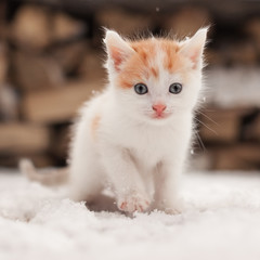 Small red lonely kitten on snow