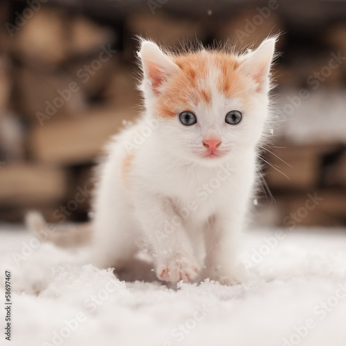 Papiers peints Chat Small red lonely kitten on snow