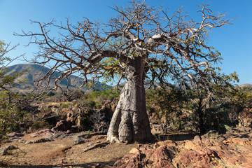 Baobab on Epupa falls