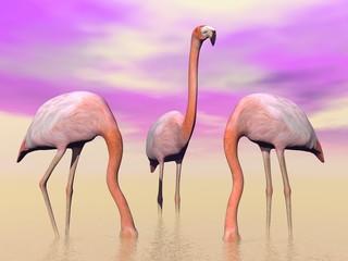 Flamingos in water - 3D render