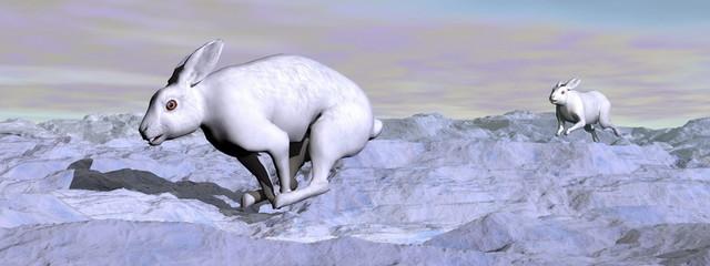 Arctic hares - 3D render