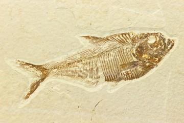 Fischfossil01